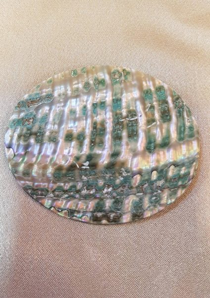 broš haliotis nautilus nakit 1