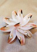 broš školjke nautilus nakit